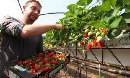 Confinement : la filière agricole recherche 200 000 volontaires pour travailler dans les champs