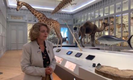 Bordeaux: Visiter de chez vous le museum d'histoire naturelle